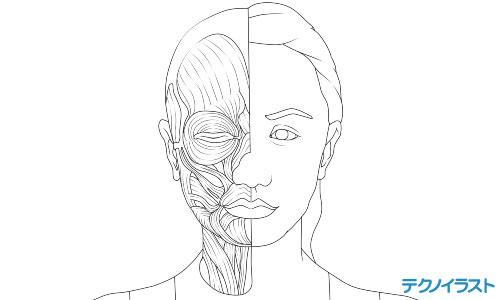 女性シューマ線画