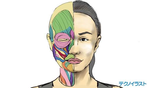 女性のイラスト下図