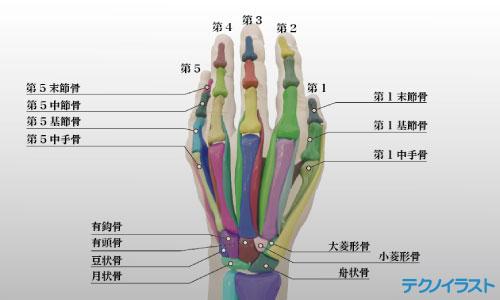 手の3Dモデルの図解