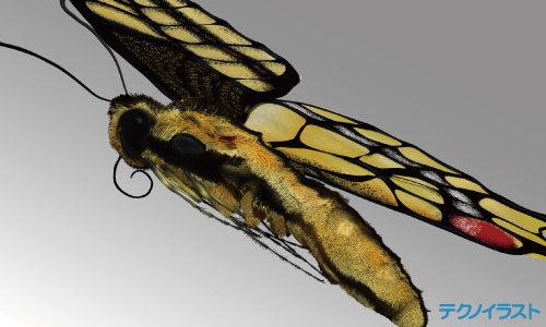 アゲハ蝶の3Dモデリングデータ